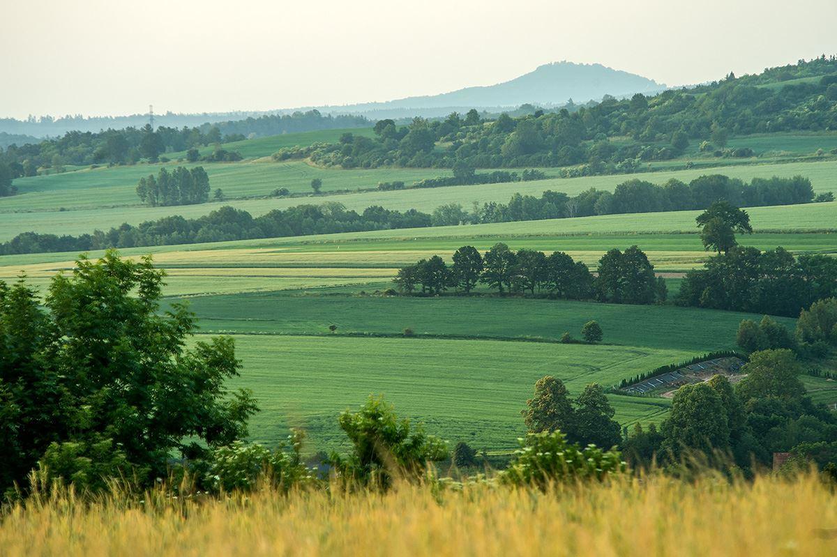 view_fields